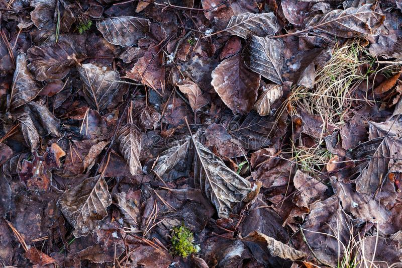 Frozen leaves on ground. Background stock image