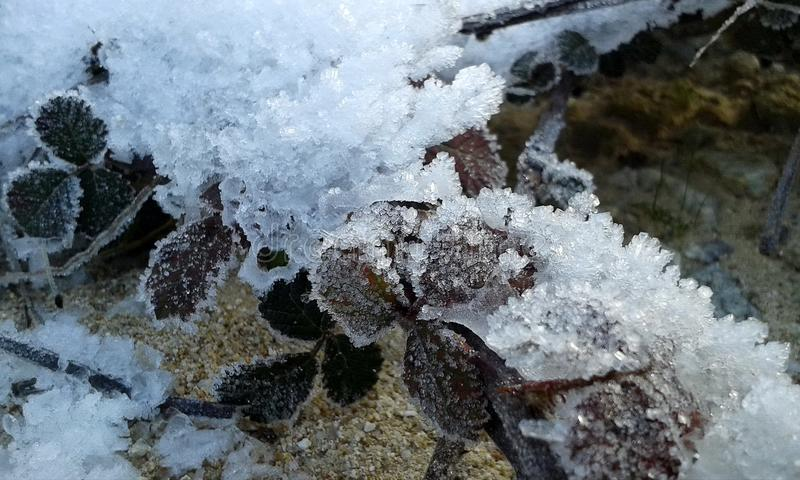 Frozen leaves on the ground. A close up of frozen leaves on the ground in winter royalty free stock photography