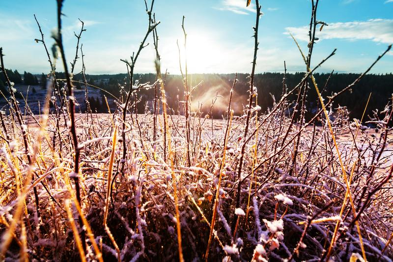 Frozen meadow. Frozen late autumn meadow close up. Winter background stock photos