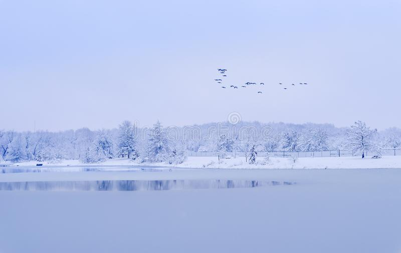 Frozen Midwestern lake with flying birds. View of frozen lake on snowy day. Flock of birds flying above the lake stock photos
