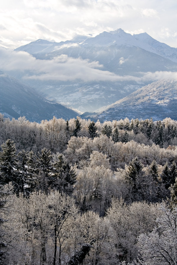 Frozen mountain and forest royalty free stock photos