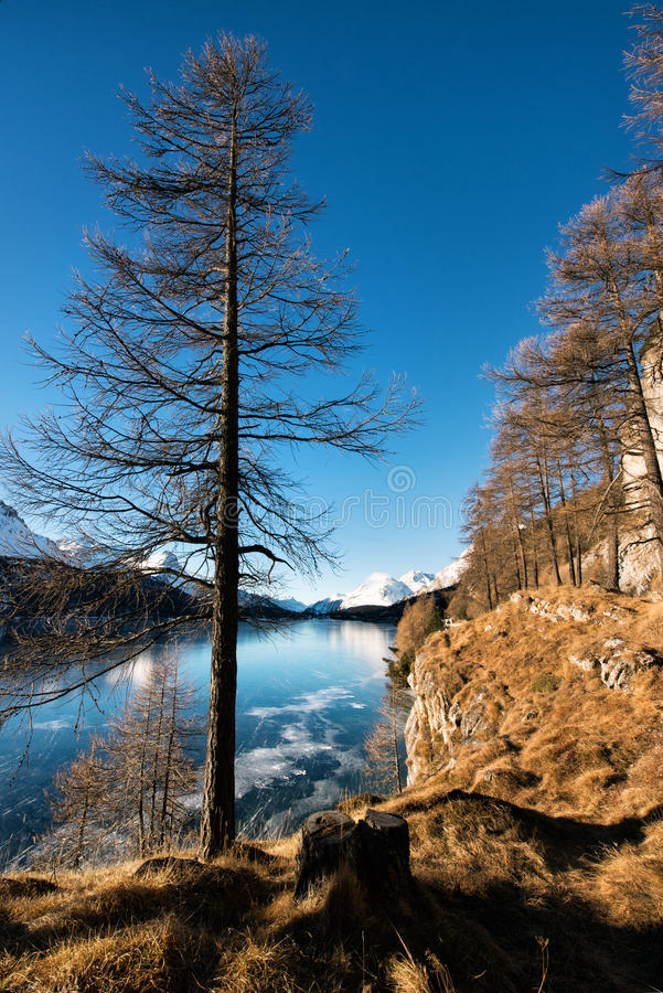 Frozen mountain lake and naked tree stock image