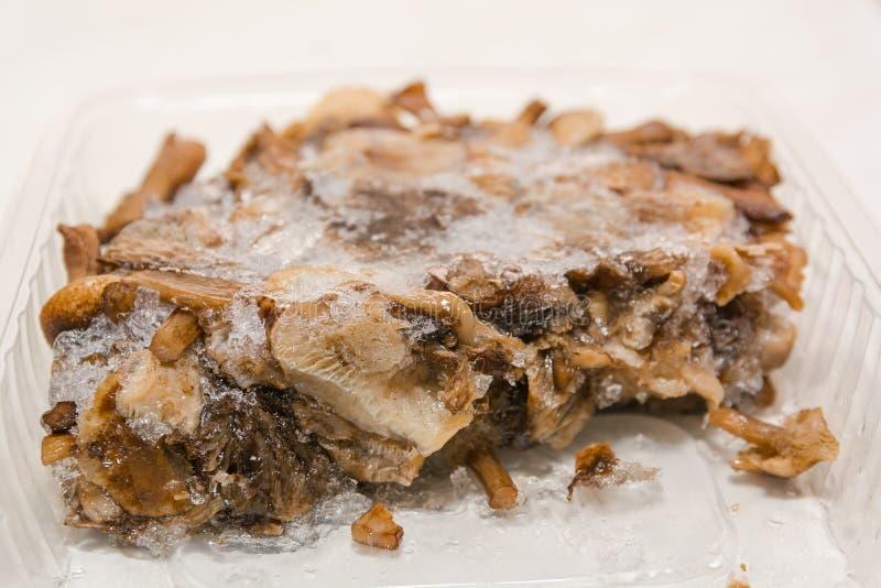Frozen mushrooms. Mushrooms in ice. Stocks of mushrooms for the winter. Mushrooms from the freezer stock images