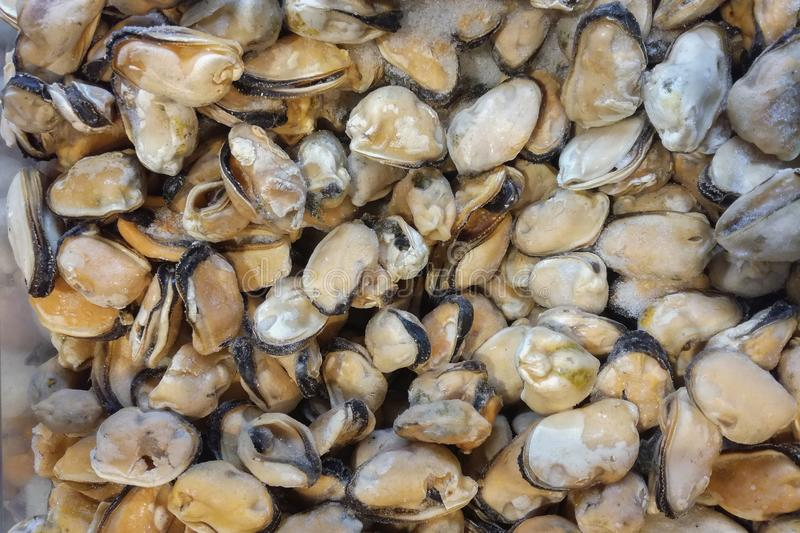 Frozen mussels on fish market, view from top, fits as background stock photo