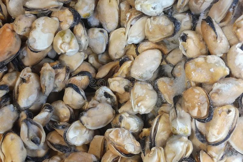 Frozen mussels on fish market, view from top, fits as background royalty free stock image