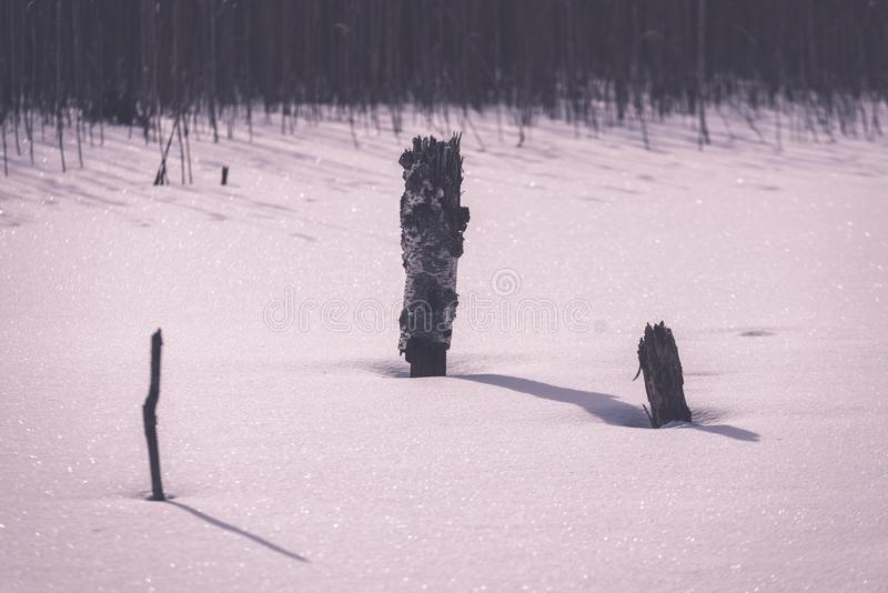 frozen naked dry and dead forest trees in snowy landscape - vint stock photography