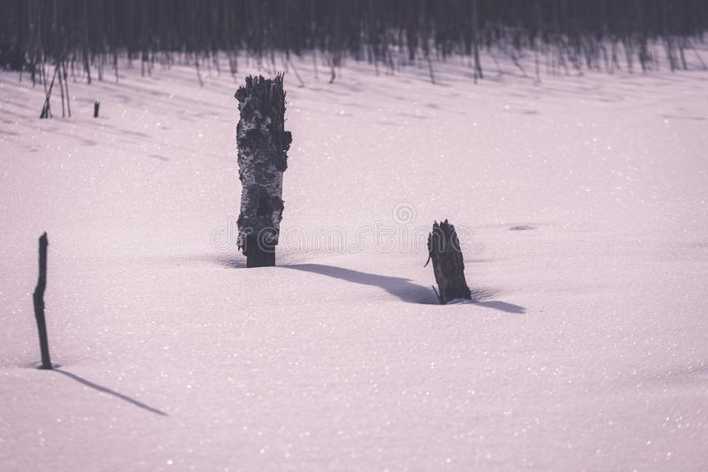 frozen naked dry and dead forest trees in snowy landscape - vint stock image