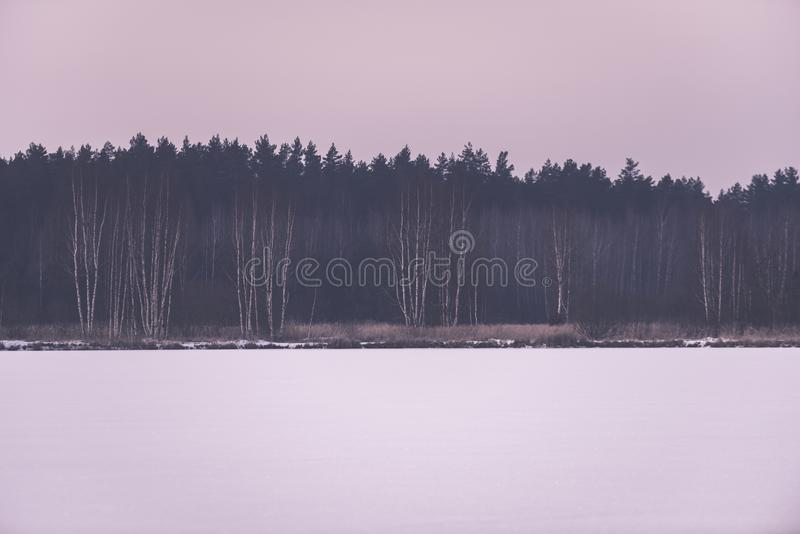 frozen naked forest trees in snowy landscape - vintage retro eff stock photos