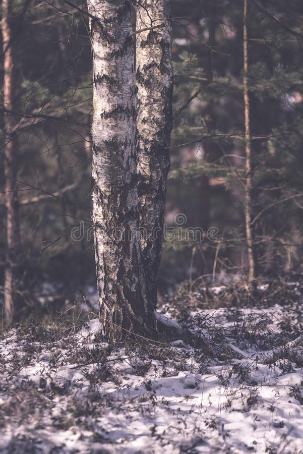 frozen naked forest trees in snowy landscape - vintage retro eff royalty free stock image