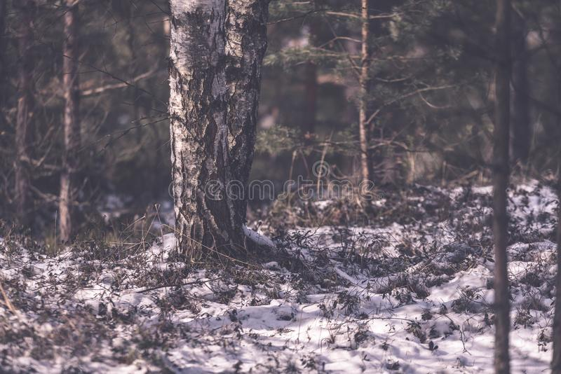 frozen naked forest trees in snowy landscape - vintage retro eff royalty free stock photos