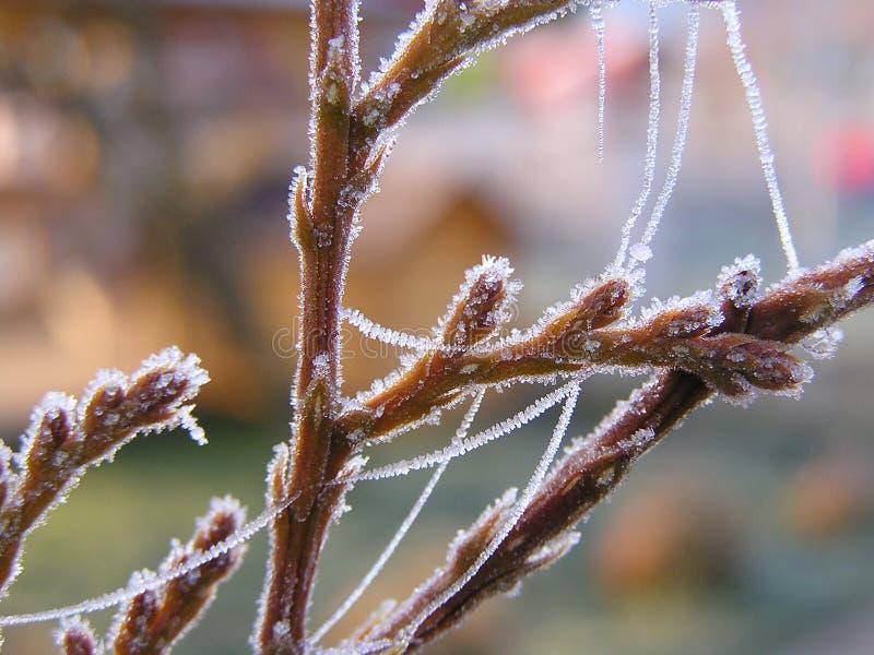 Download Frozen nature stock image. Image of minus, bark, nature - 4445807