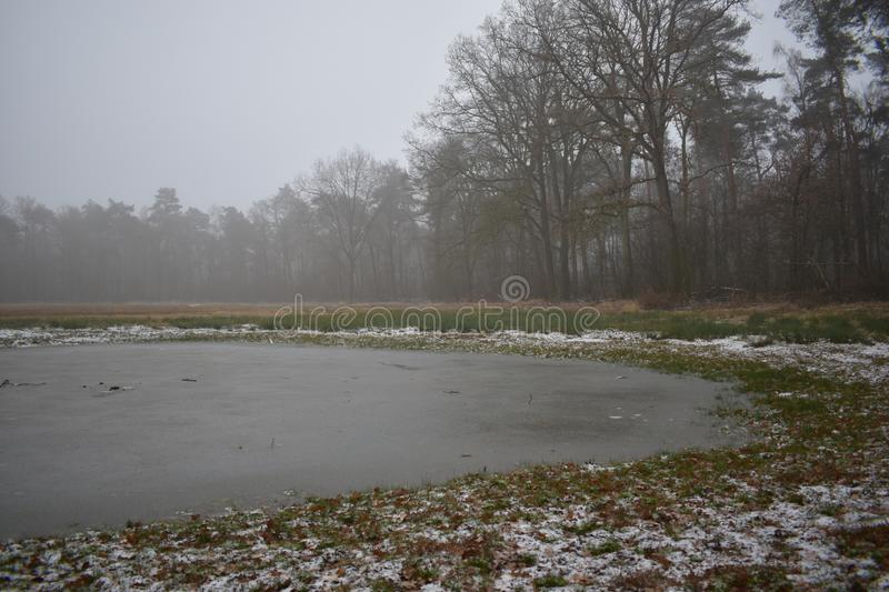 Frozen over fen in a forest. A frozen over fen in the middle of a forest royalty free stock image