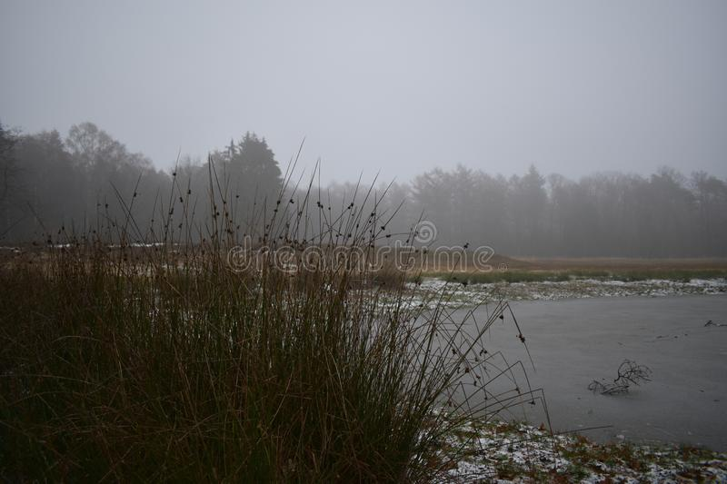 Frozen over fen in a forest. A frozen over fen in the middle of a forest stock photos