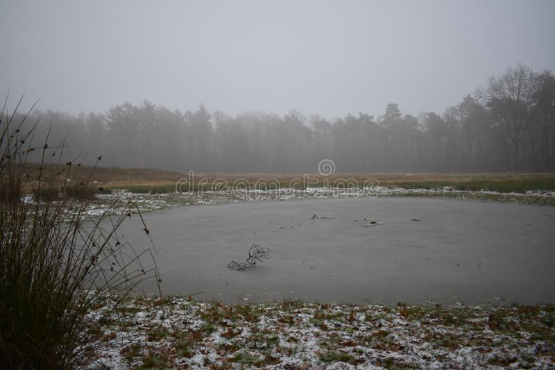 Frozen over fen in a forest. A frozen over fen in the middle of a forest royalty free stock photo