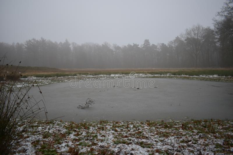 Frozen over fen in a forest. A frozen over fen in the middle of a forest royalty free stock photos