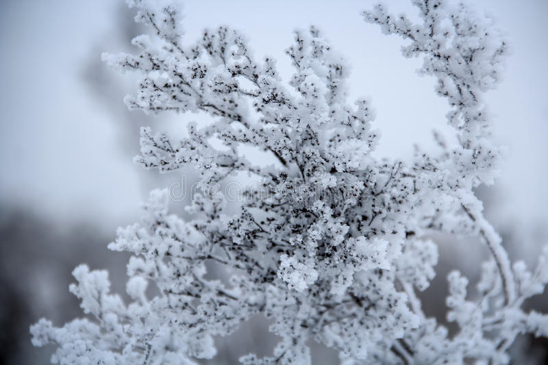 A frozen plant covered with frost stock photo