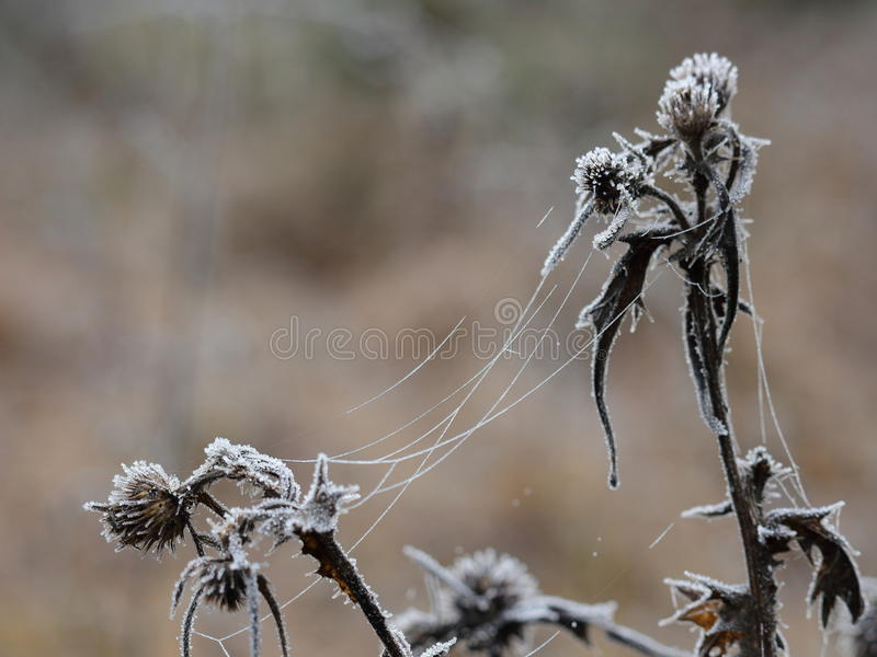 Frosted plant and spider silk nature details stock image