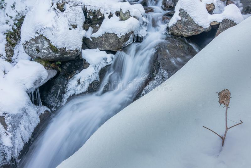 Frozen plant at waterfall during winter royalty free stock images