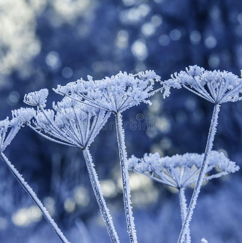 Free Frozen Plants Stock Images - 45036564