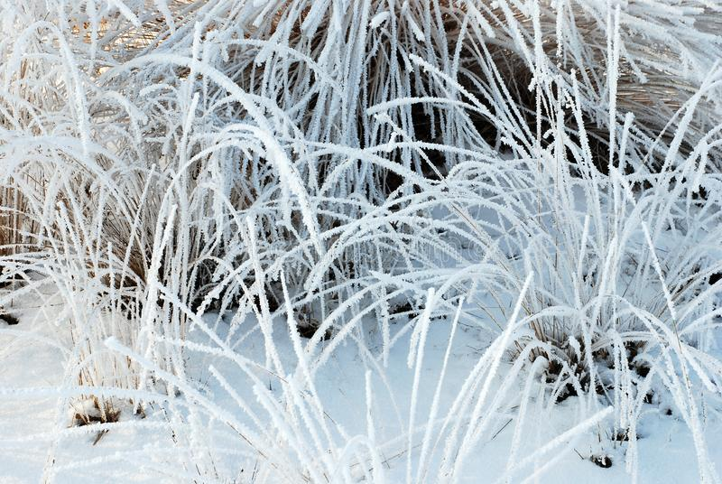 Download Frozen plants stock image. Image of vegetation, snow, winter - 8318183