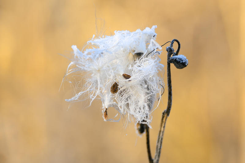 Frozen plants in early morning royalty free stock images