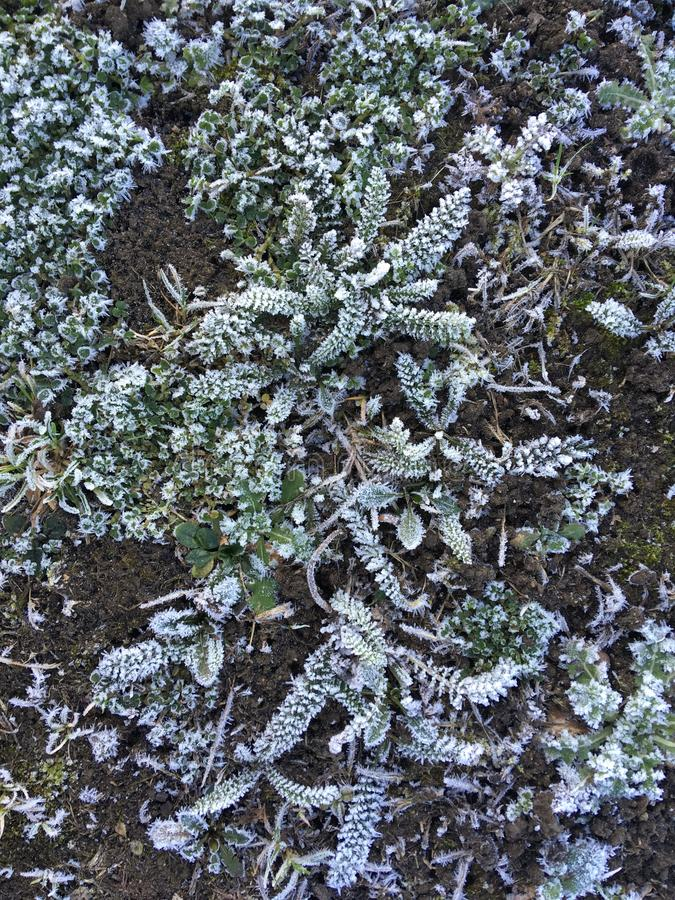 Frozen plants with frost. Created by dji camera stock images