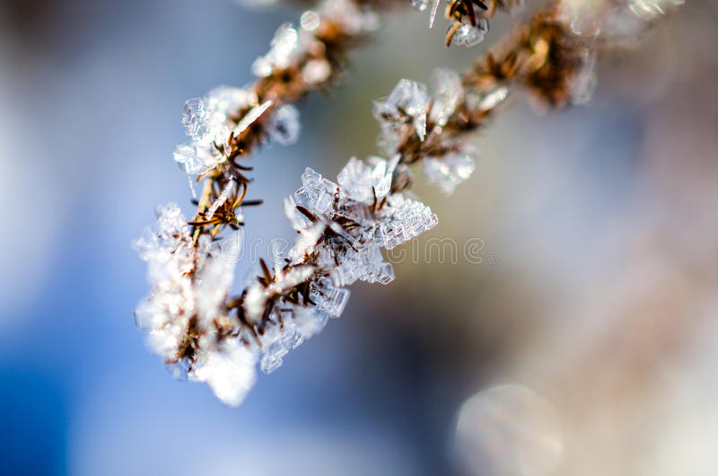 Download Frozen Plants Grown With Ice Crystals Stock Image - Image: 83704843