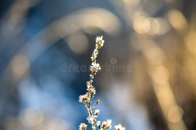 Download Frozen Plants Grown With Ice Crystals Stock Image - Image: 83706209