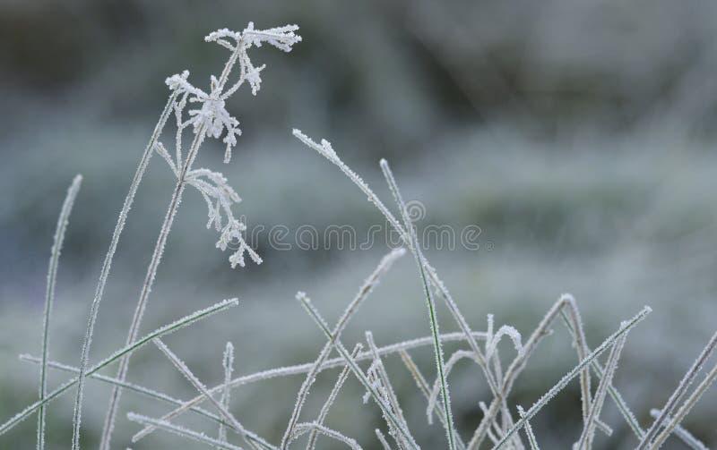 Frozen plants. stock images