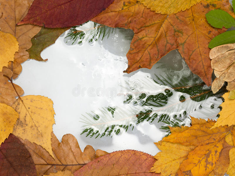 Frozen puddle royalty free stock photo