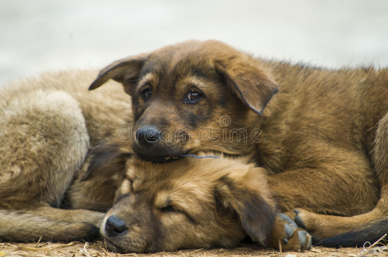 Frozen Puppies. It's the month of December again, the month of freezing cold stock photo