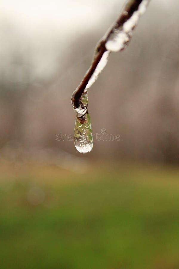 Download Frozen Rain Drop stock image. Image of precip, nature - 2932215