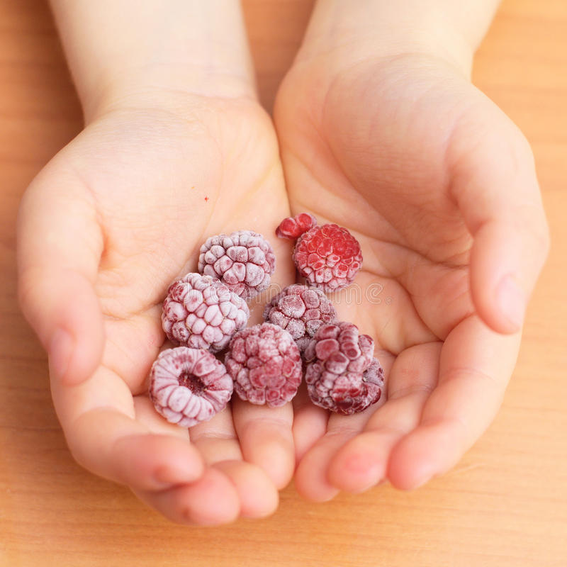 Frozen raspberries in the toddler palms. Frozen raspberries just from the freezer in the child palms royalty free stock photos