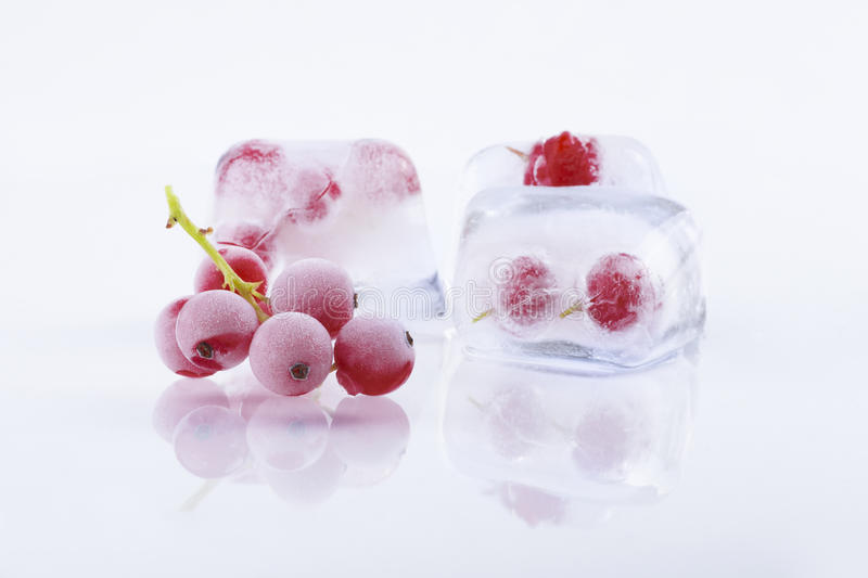 Frozen red currant in ice cubes stock photography