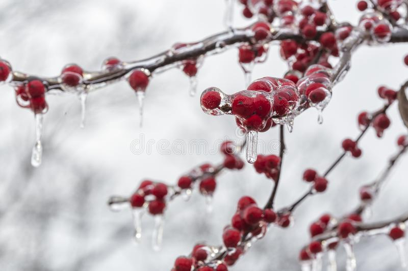 The Frozen Red Fruit royalty free stock photos