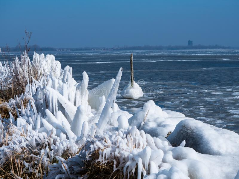 Frozen reeds in winter. Iced reeds on the shore of a frozen lake stock images