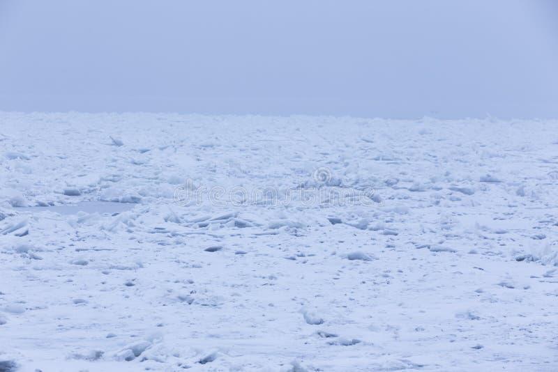 Frozen river. Beautiful swans swim in the frozen river Danube in winter season royalty free stock image