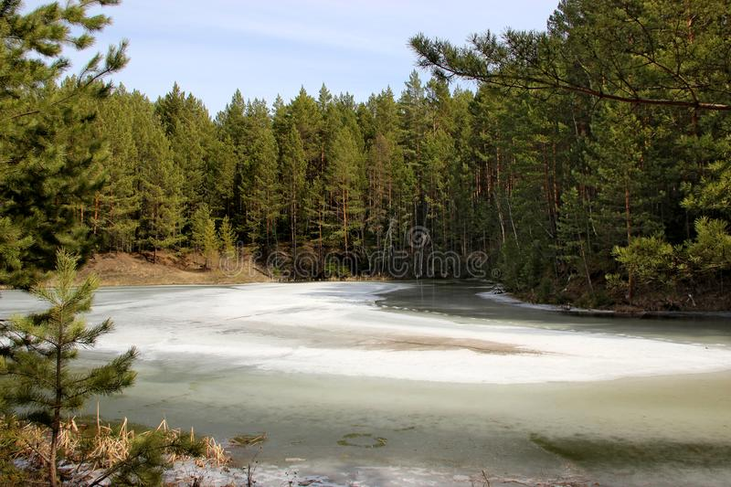 Frozen river bends green forest stock images