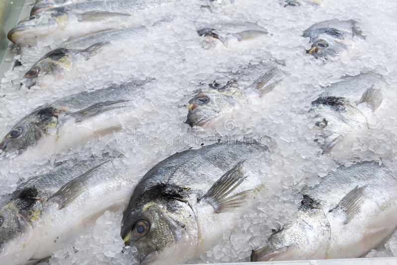 Frozen sea bream fish. In ice royalty free stock images