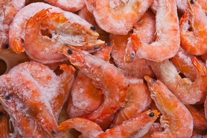 Frozen shrimps royalty free stock photo