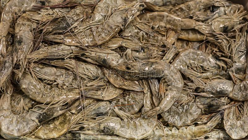 Frozen shrimps, top view stock photo