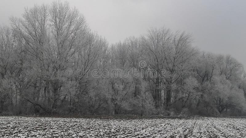 Frozen snow on forest stock photography