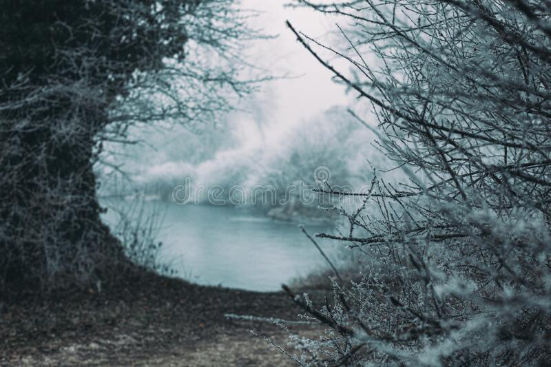 Frozen snowy landscape, ravine covered in frost and fog, frozen lake water in distance. Bush branches in front stock photography