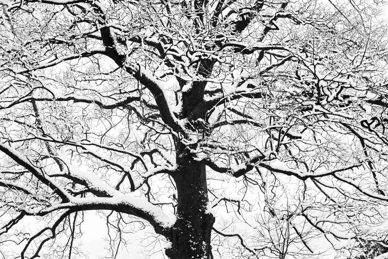 Frozen snowy trees and branches in freezing winter landscape. Frozen snowy trees with icy twigs and branches in freezing winter landscape stock photo