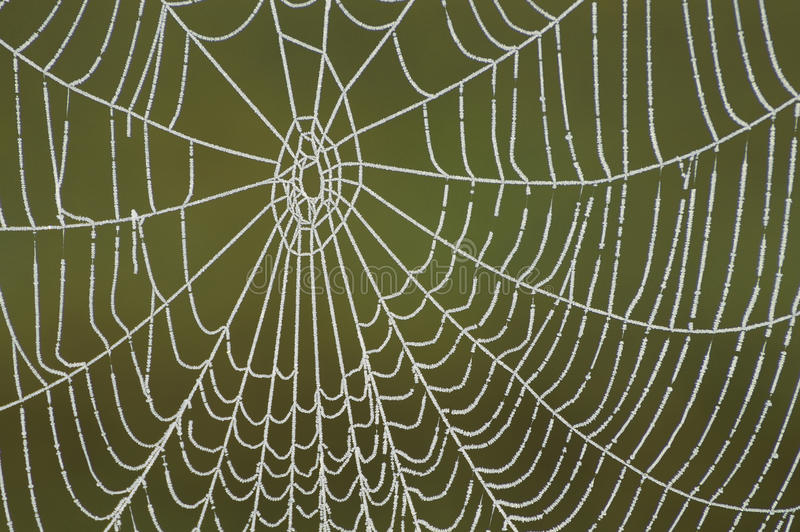 Download Frozen Spider Web Stock Images - Image: 24247974