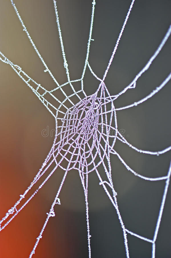 Frozen Spider Web Macro Royalty Free Stock Images