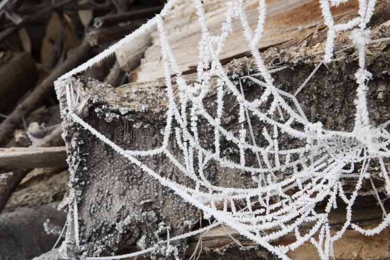 Frozen cobwebs hang in front of logs royalty free stock photos