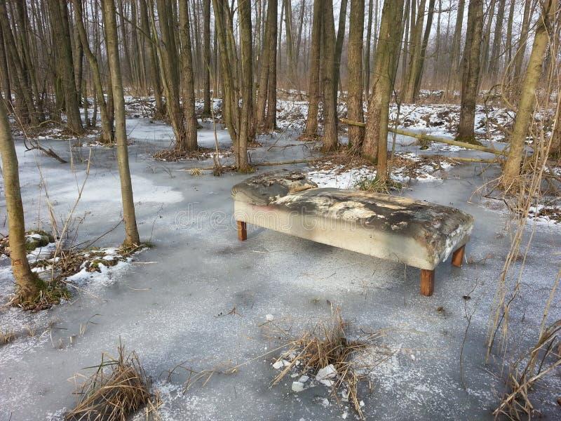 Frozen swamp stock images