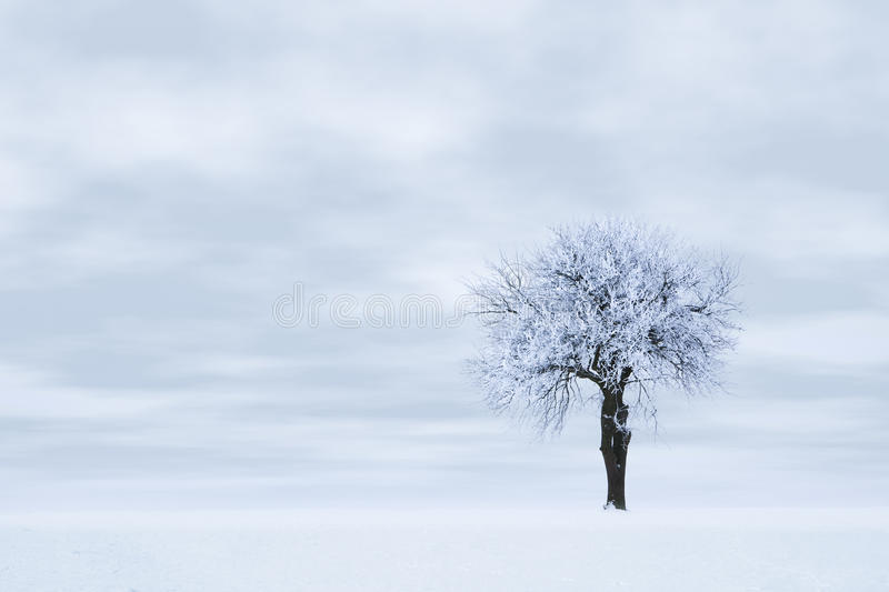 Download Frozen tree stock photo. Image of snowlandscape, nature - 12061404