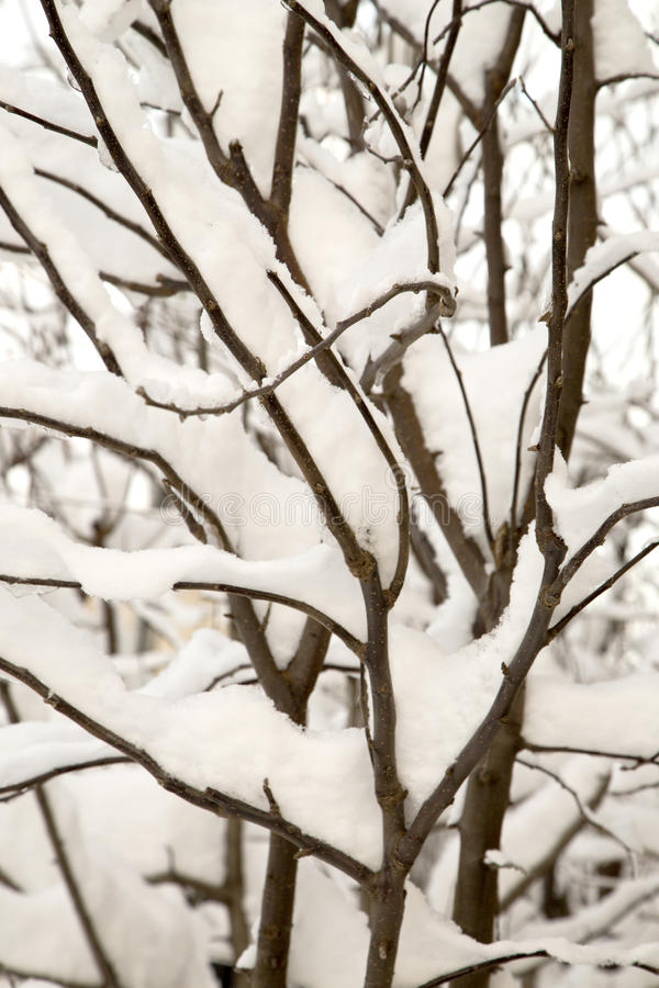 Frozen tree branches on winter stock image